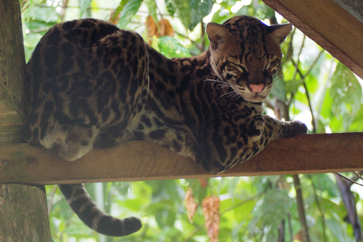 katze-ecuador-amazon-header