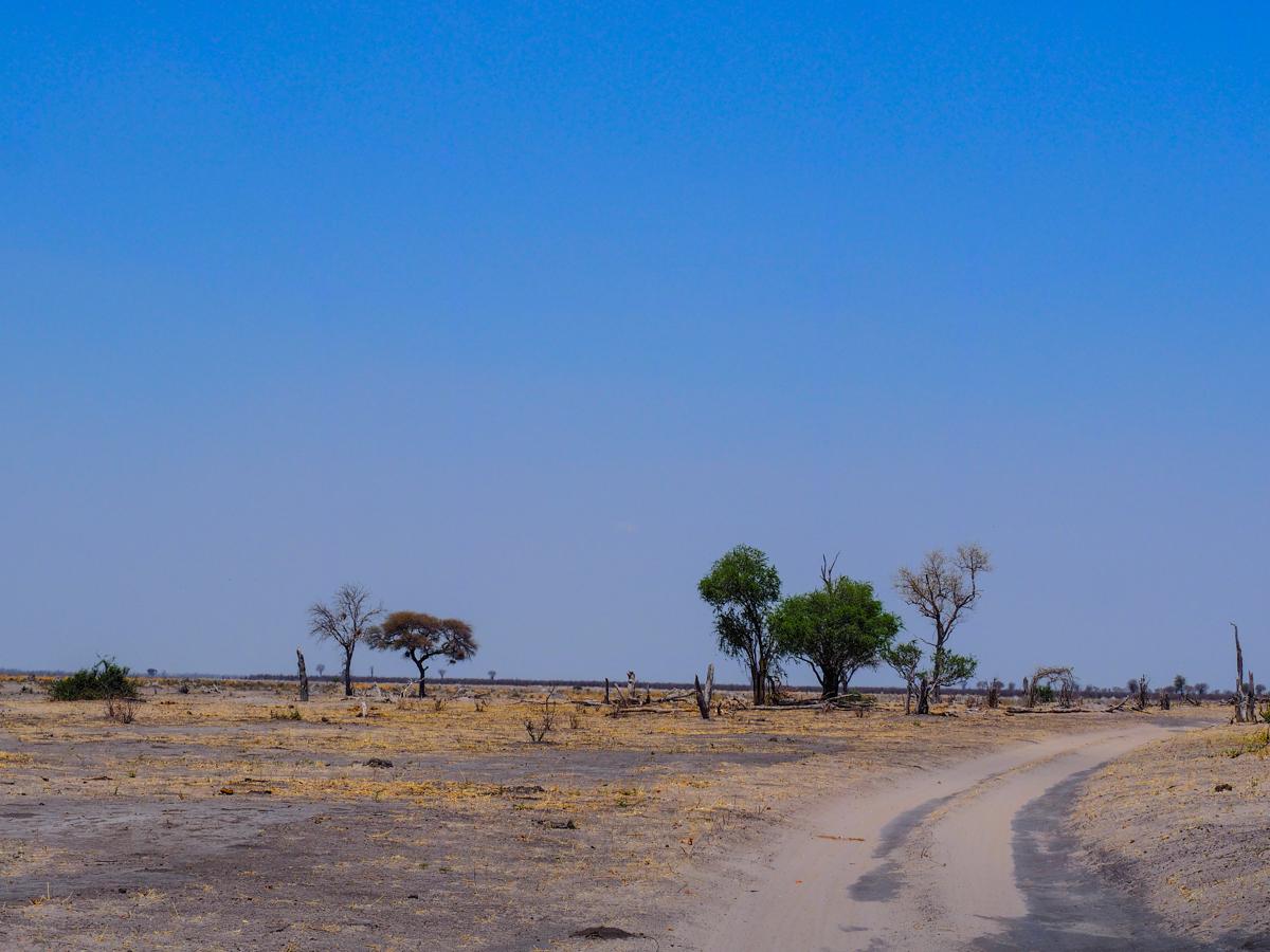 Landschaft vor dem Mababe Gate