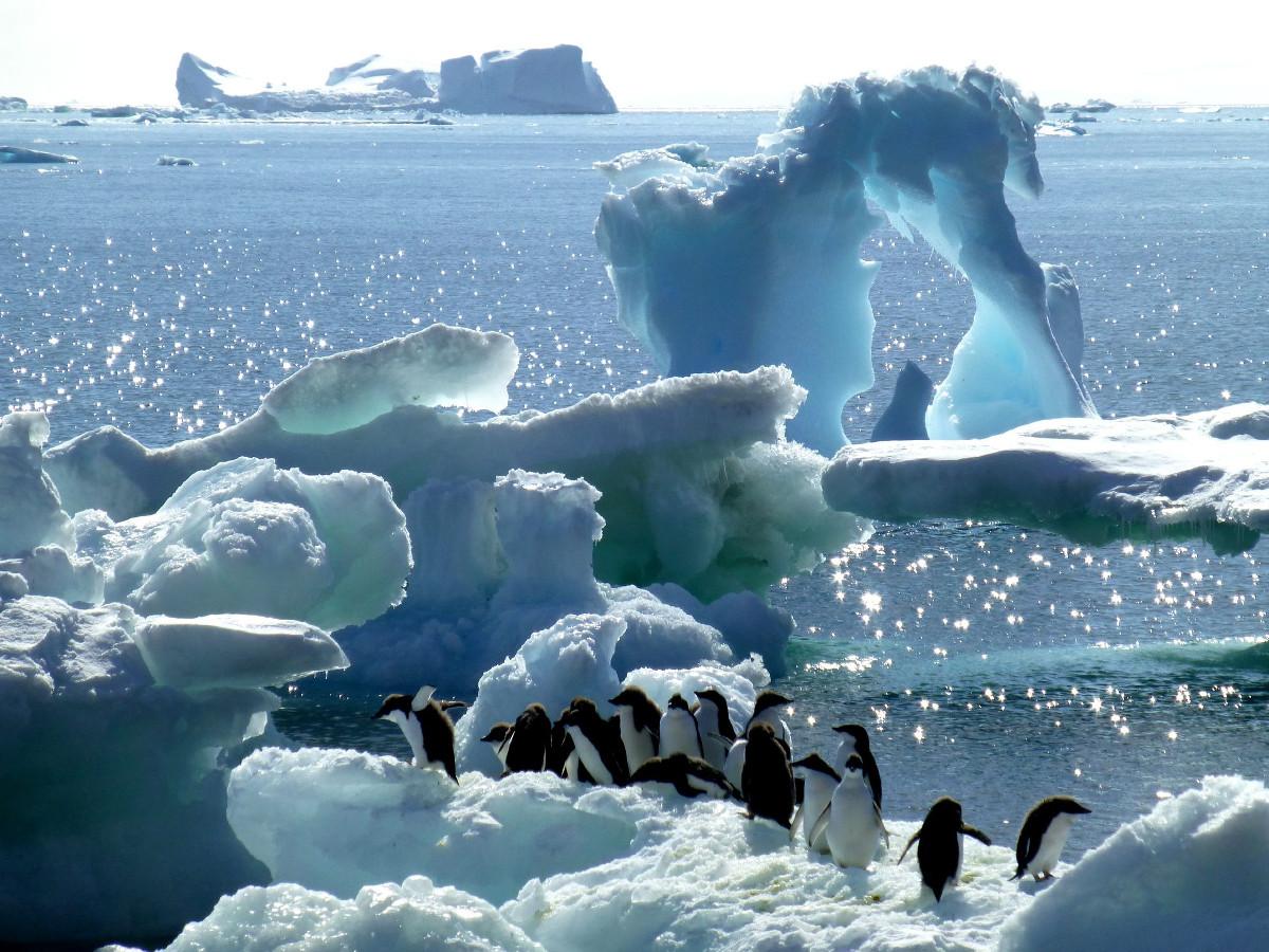 Antarctica / Lucia Zulianello