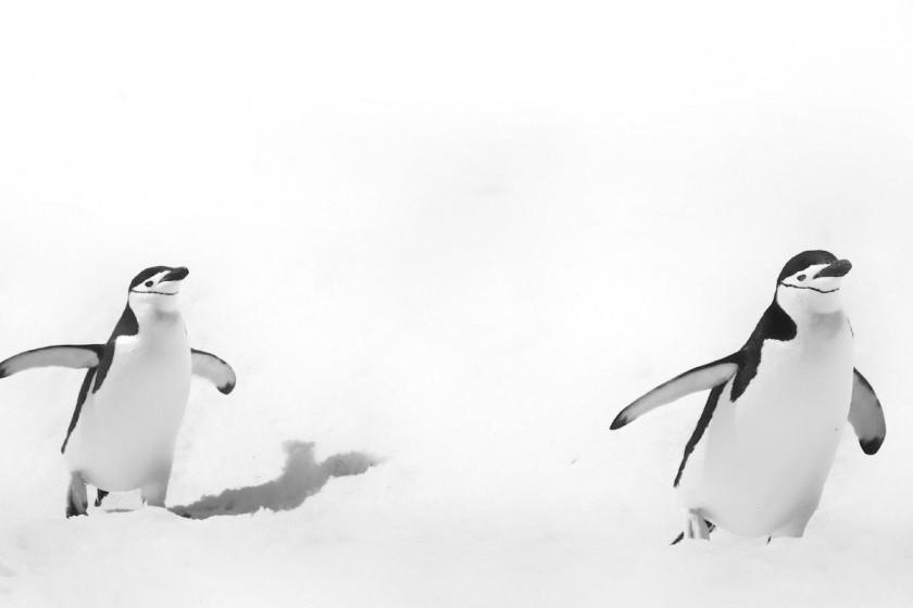 Antarctica / Tholl Jean Pierre