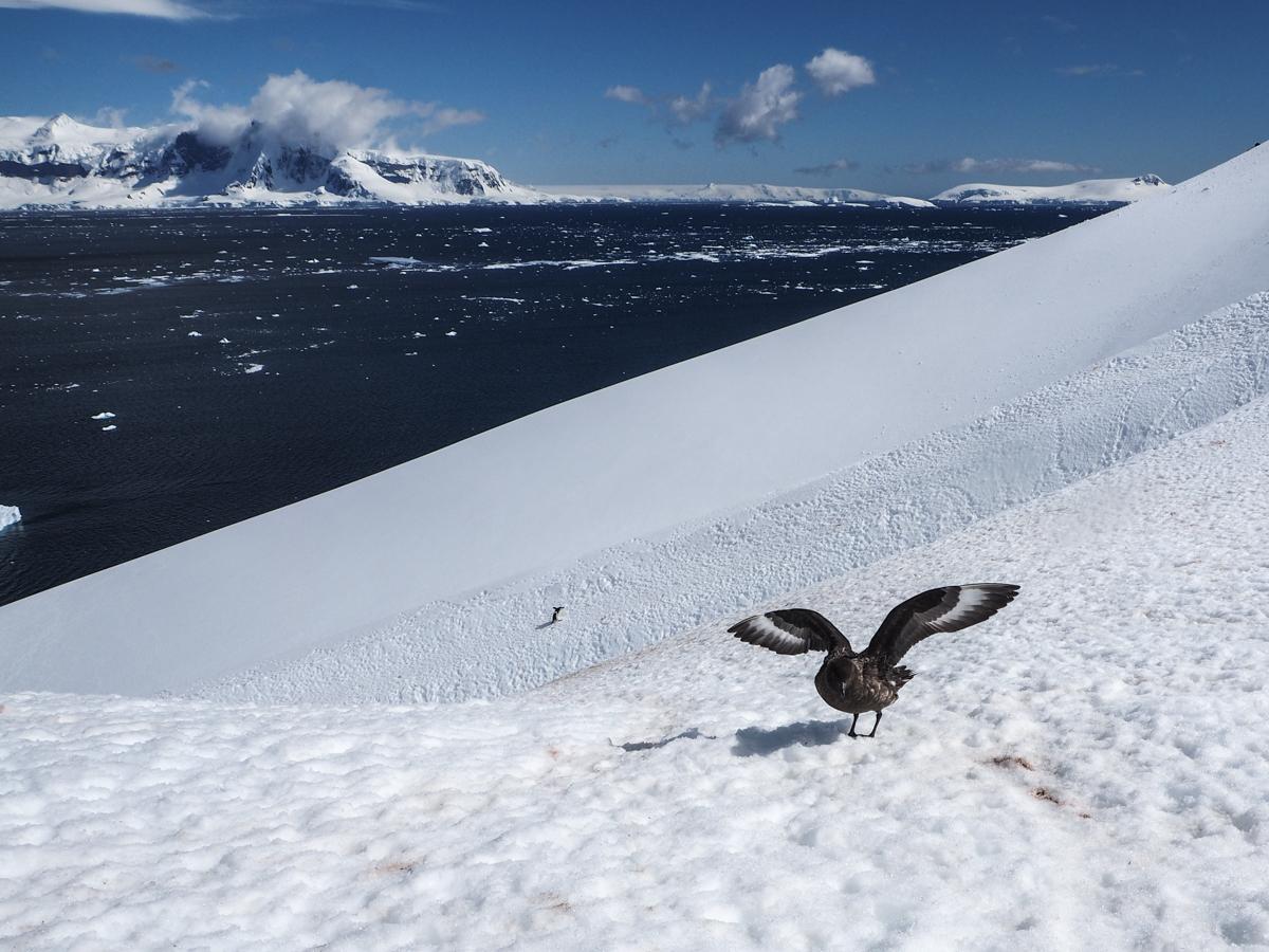 Orne Harbour, Antarktis