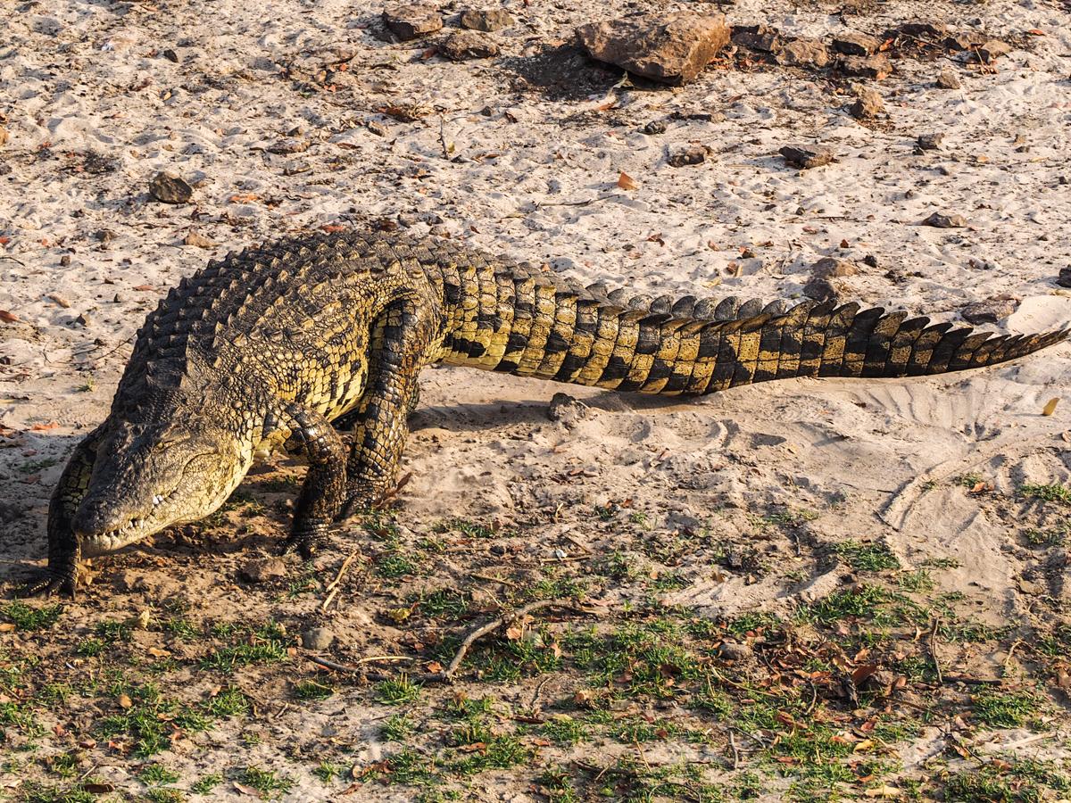 Botswana, Chobe National Park