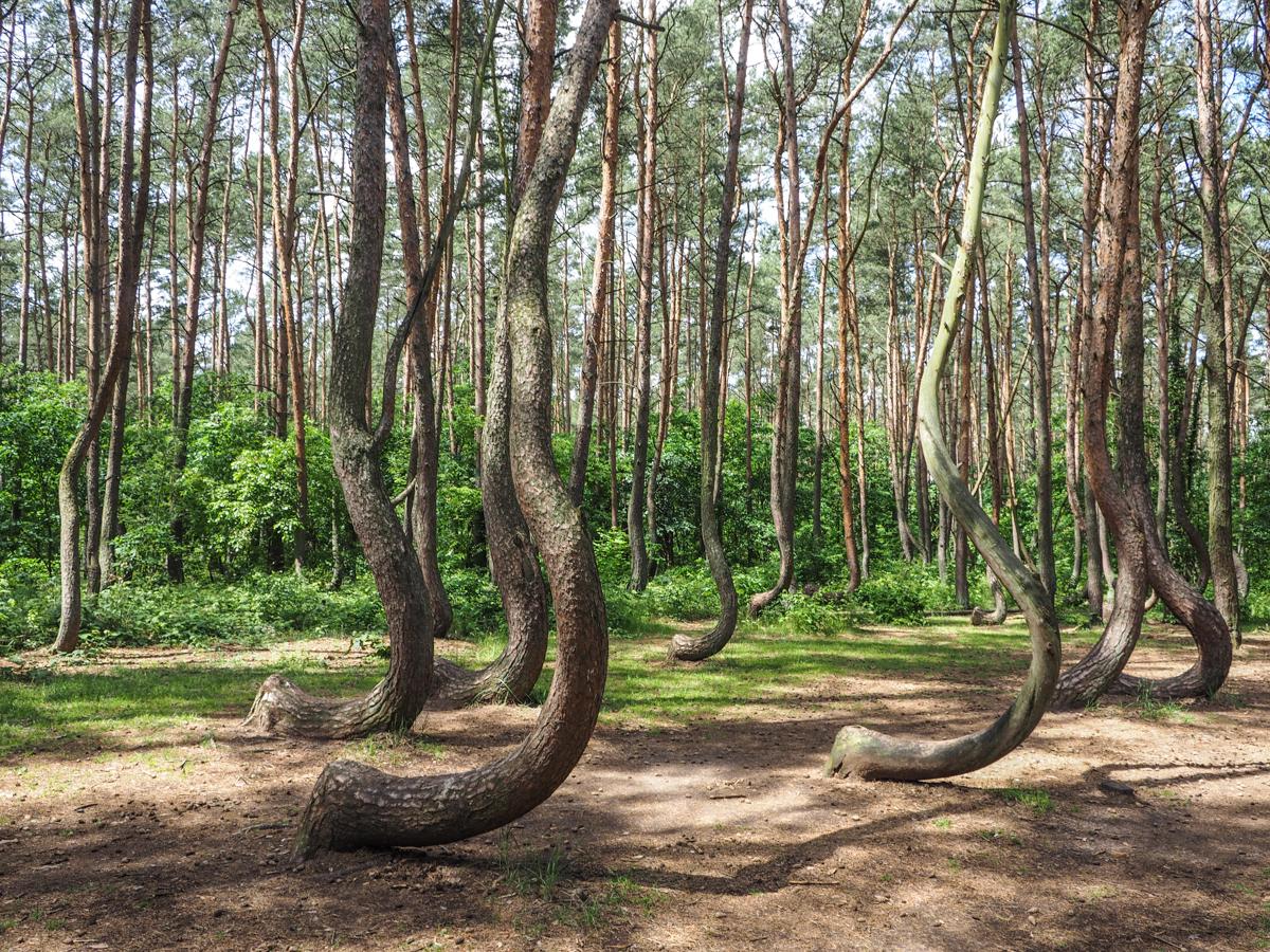 Krummer Wald