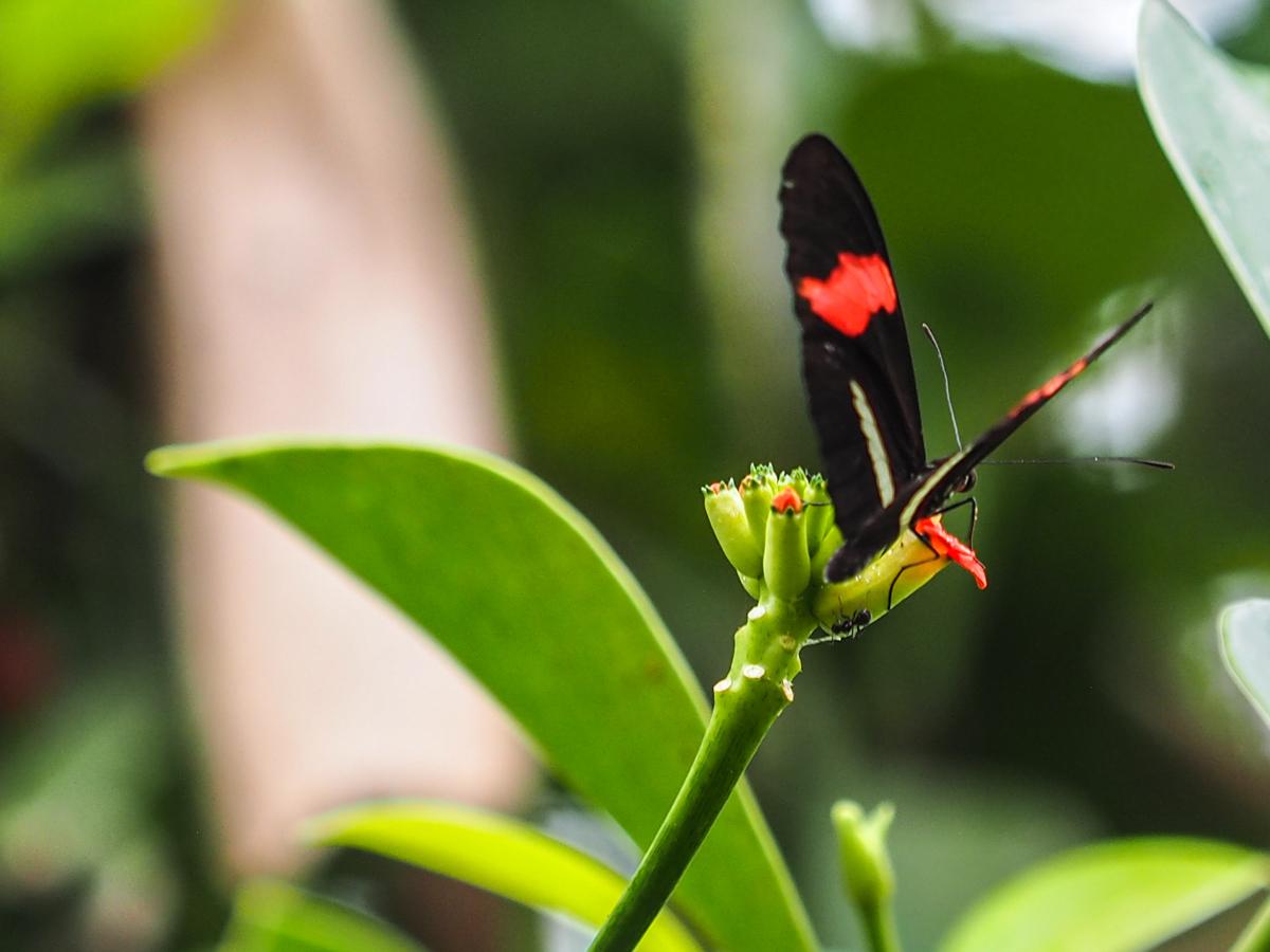 Costa Rica, Tenorio Volcano National Park