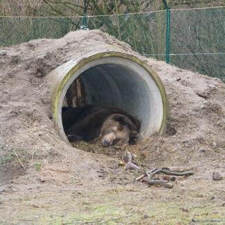 Das war dann später im Bärenwald ein Bär im Versteck