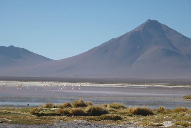 Laguna Colorada mit Flamingos