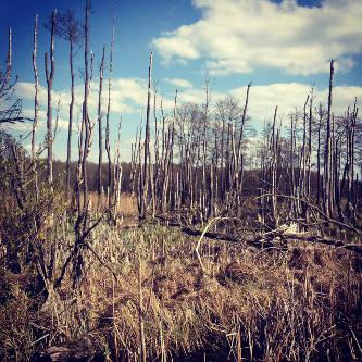 Im surrealen Sumpfgebiet bei Babke