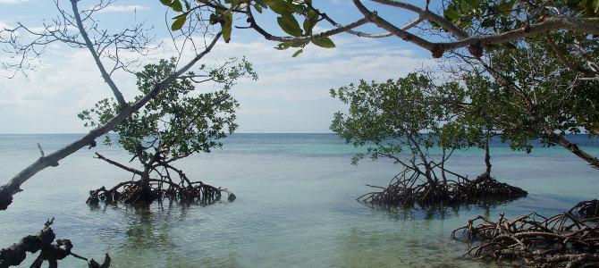 Karibik auf Kubanisch – Cayo Jutias
