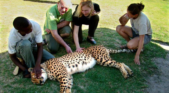 Foto 1: Gepard