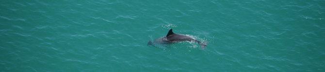 Delfin zeigt uns seine Flosse