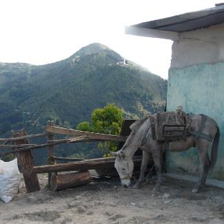 Esel auf dem Monserrate