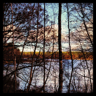 Krummer See durchs Geäst