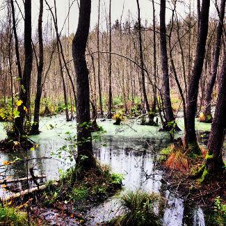 Moorlandschaft hinter dem Grossen Saefkowsee