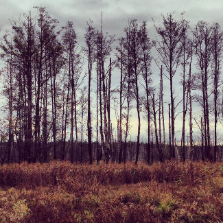 Landschaft in der Nähe des Großen Saefkowsees