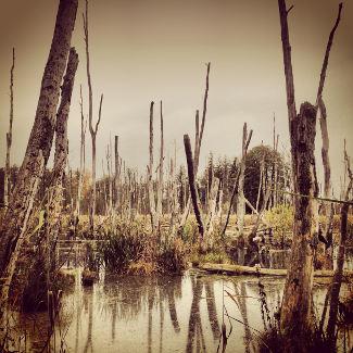 Hinter dem Wald liegt ein Wald