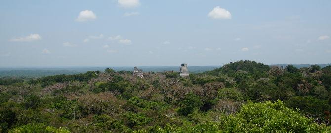 Tikal, Blick über den Regenwald