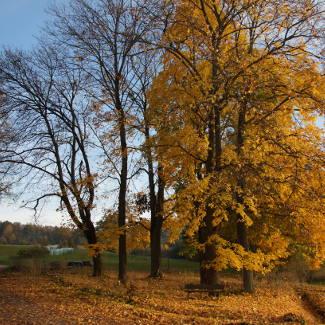 Herbstidylle im Thüringer Wald: halbvoll-halbleer