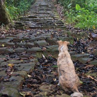 Hund in der Ciudad Perdida