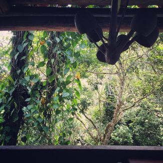 Ausblick ins Grüne von der Kaffeefinca Santa Isabel
