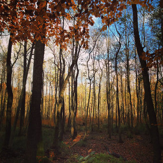 Waldwanderung im Herbst