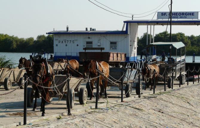 Kutsche im Donaudelta