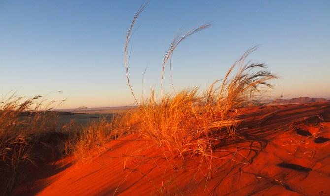 Roter leuchtender Sand der Namib