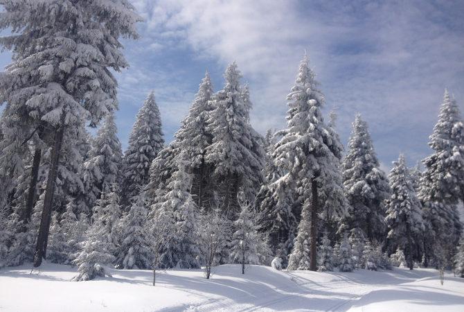 Auf dem Rennsteig bei Oberhof