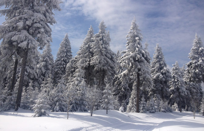 Winter im März 2013 im Thüringer Wald