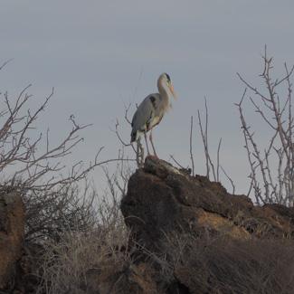 Ein Paradies für Birdwatcher