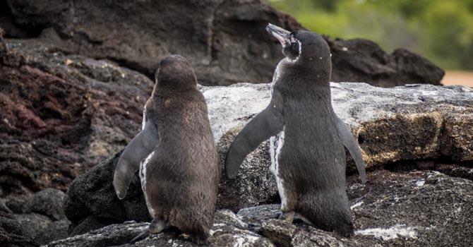 Pinguine beim Sonnenbad