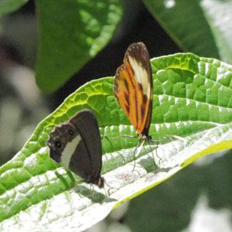Schmetterlinge gibt es zuhauf