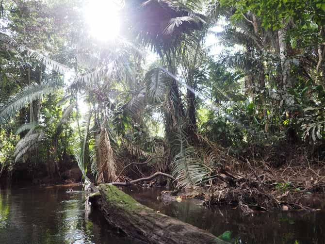 Auf dem Añangu Creek