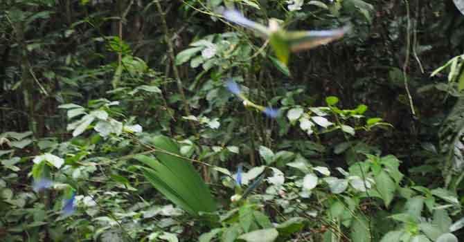 Ein herabfallendes Blatt und sie fliegen davon