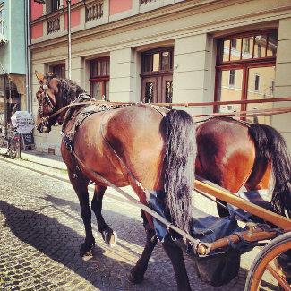 Pferdekutsche in Weimar
