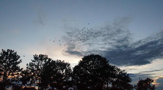 Abends, wenn die Vögel aus dem Urwald zurückkehren