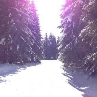 Schneewald auf dem Rennsteig