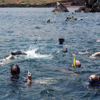 Täglicher Schnorchelgang auf Galapagos