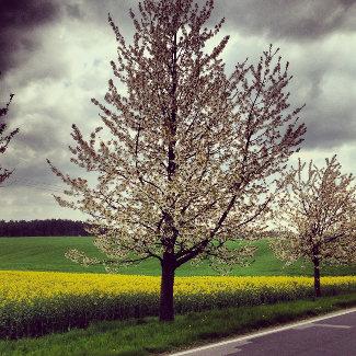 Straße von Mirow nach Schwarz