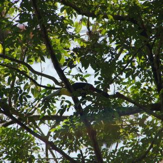 Tikal, In den Wipfeln sitzen Tukane