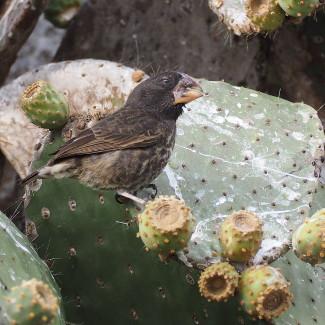 Kaktus mit Vogel