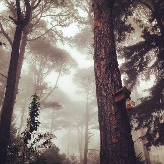 Sicht gleich null, aber geheimnisvoller Walk auf dem Boqueron