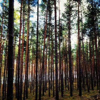 Wald im Müritz NP