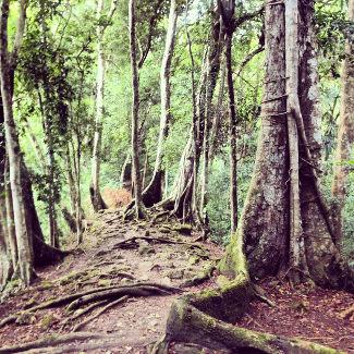 Wege auf dem Gelände, Tikal
