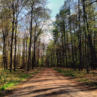 Straße nach Grünheide