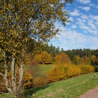 Unterwegs im Thüringer Wald