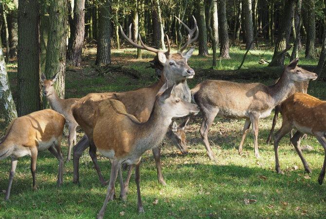 Buntes Durcheinander im Wildpark Boek