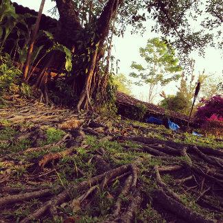 Wurzelwerk auf der Hacienda San Lucas