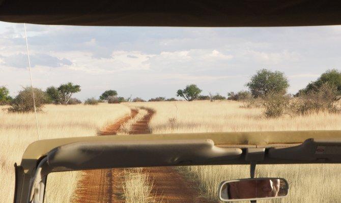 Sundowner Fahrt durch die Kalahari