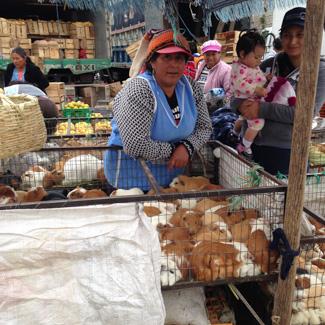 markt_saquisili_ecuador_325_meerscheinchen