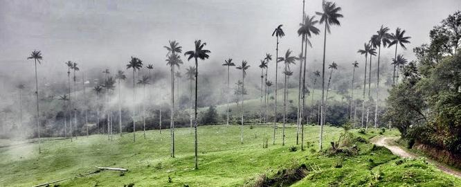 Palmen bei Salento